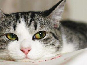 Кішки вміють керувати людьми