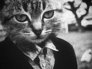Людина-кішка (фотографії)