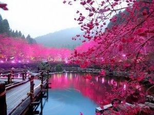 Райський сад в Японії