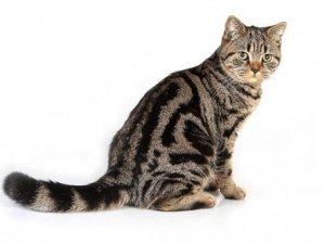 10 цікавих фактів про котів