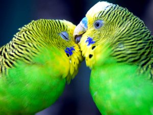 Папуги дають імена своїм дітям