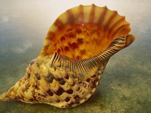 Чому ми чуємо в морській раковині «шум моря»?