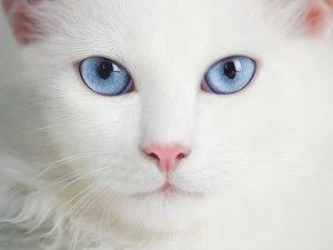 Чудові фото кішок від фотографа Eibo Jeddah.