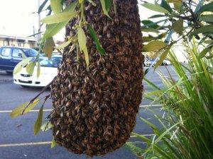 Як бджоли будують вулики?