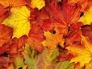 Чому листя жовтіє?.