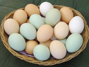 Чому не можна роздавляти яйця руками.