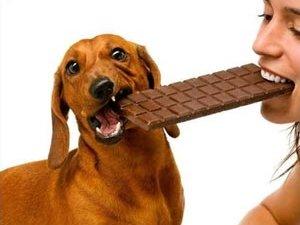 Шоколад може бути отрутою для собак