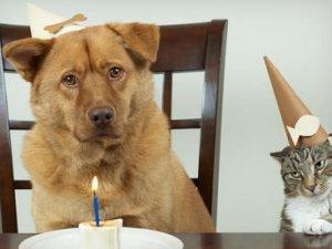 Як відсвяткувати день народження?