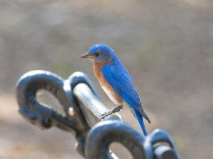 Як спіймати синього птаха удачі?