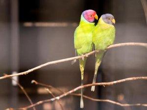 Як визначити вік і стать папуг?