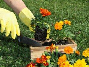 Як очистити руки і нігті після роботи в саду?