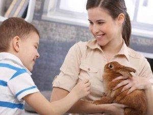 Як годувати домашнього кролика?