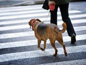Як привчити собаку ходити поруч?