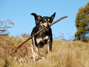 Як захистити собаку від кліщів влітку?