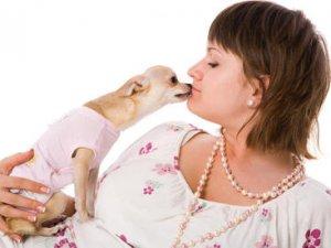 Як вибрати кишенькову собачку?