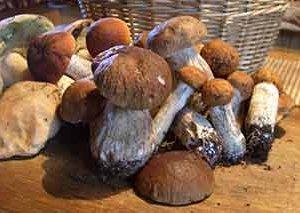 Що ви знаєте про гриби?