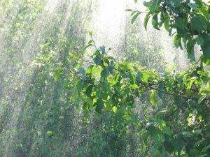 10 цікавих фактів про дощ